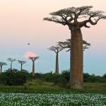 L'Olio di Baobab, rimedio naturale per una pelle perfetta